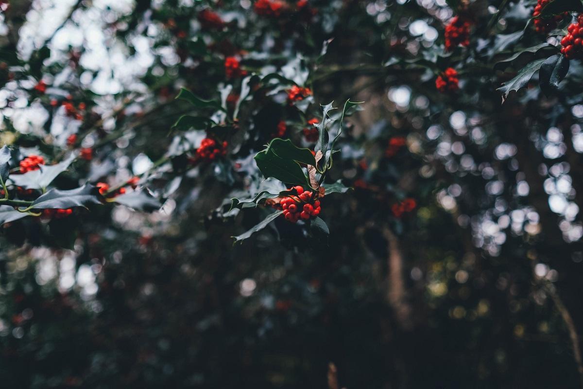 20 Ideen für den Sprachkurs zur Weihnachtszeit - Teil 1 - DaF für ...